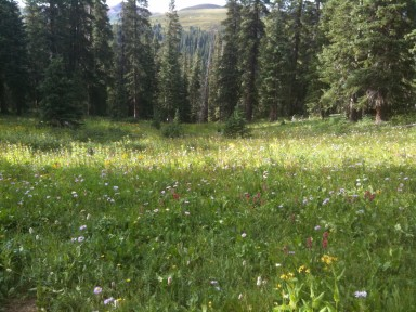 Above treeline, the wildflowers are in full bloom.